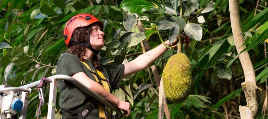 Lucie Oldale with the Jackfruit