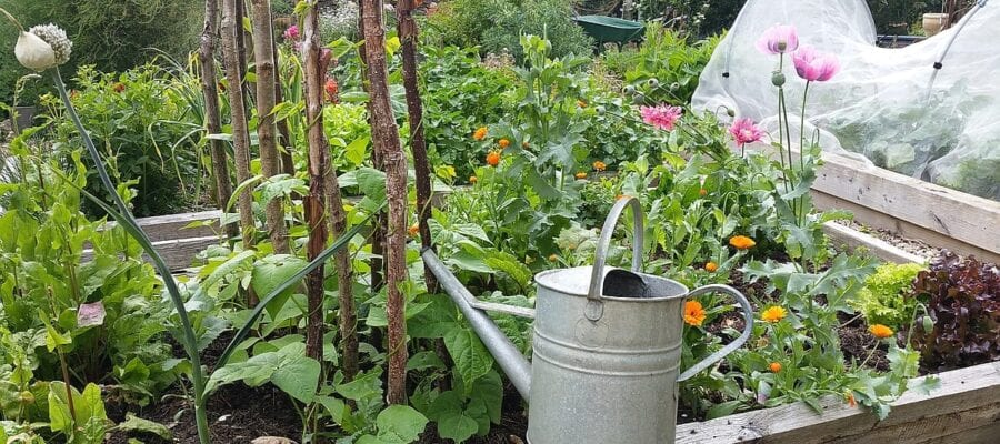A mixed organic allotment also provides a home for wildlife